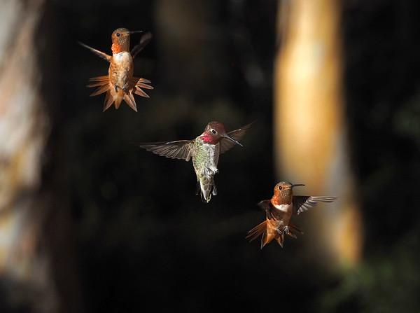 In flight (or in fight!)