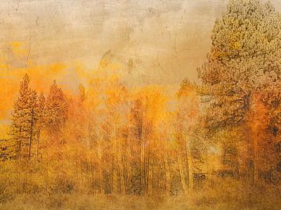 landscapes ...