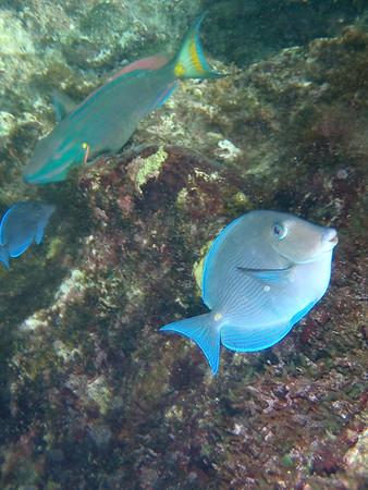 Gorda Underwater