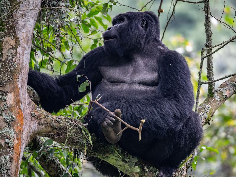 Uganda_T_Gor-2739.jpg