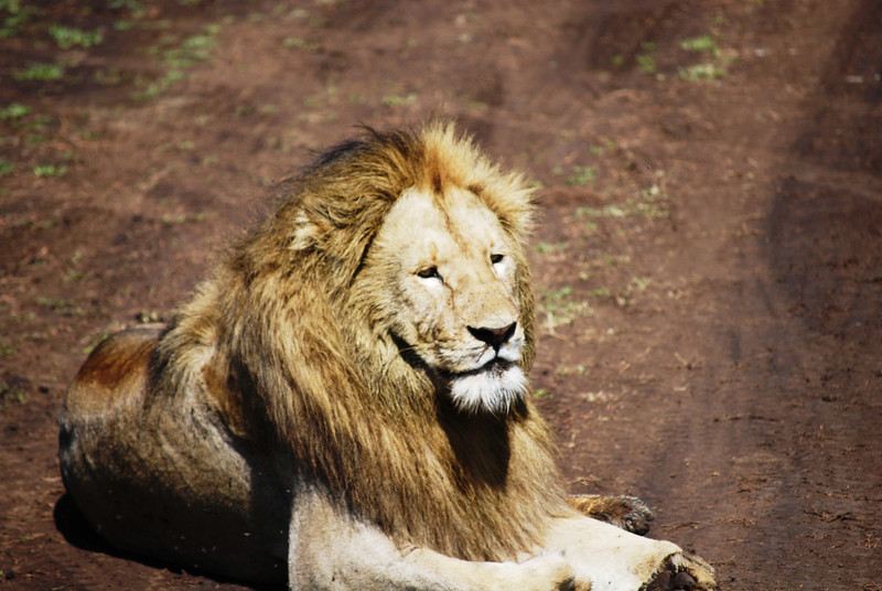 Ngorongoro (124).JPG