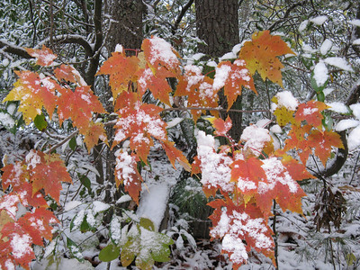 Snow 2008 October