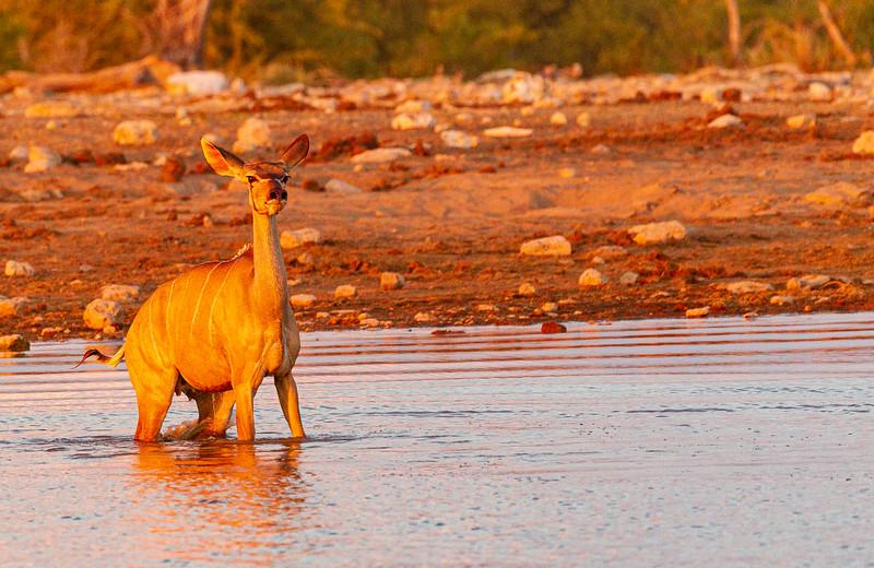 Kudu escape 1