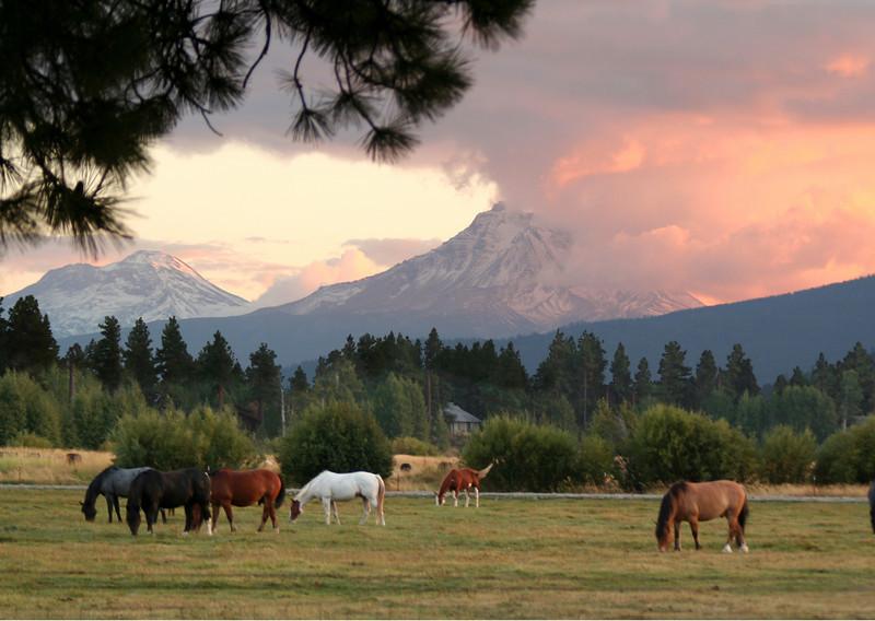 BBR horses sunset.jpg