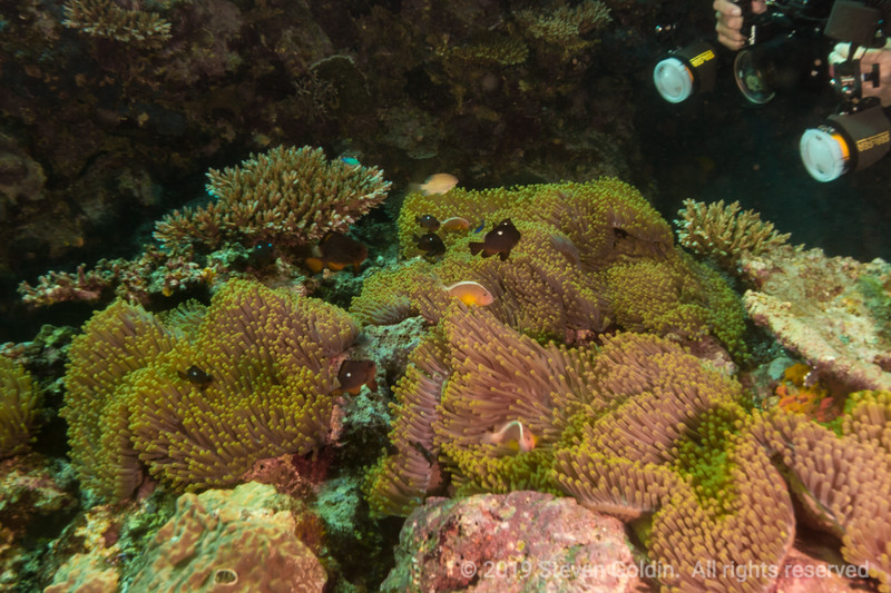 Fiji 0819 SJGoldin-154.jpg