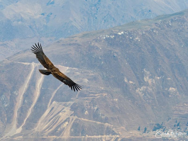 Peru-15102019-424.jpg
