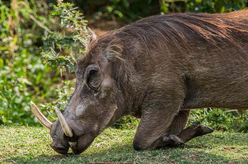Warthogs-1.jpg