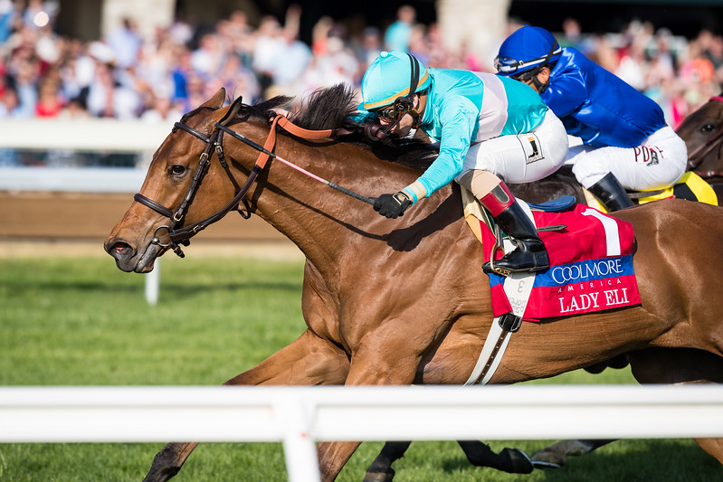 Lady Eli (Divine Park). Irad Ortiz up, runs second in the Jenny Wiley at Keeneland 4.15.17. Chad Brown trainer, Sheep Pond Partners owner.