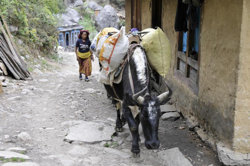 080516 2590 Nepal - Everest Region - 7 days 120 kms trek to 5000 meters _E _I ~R ~L.JPG