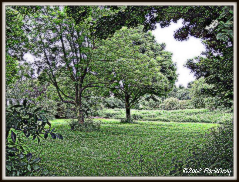 Serene Green  ©2008 FlorieGray
