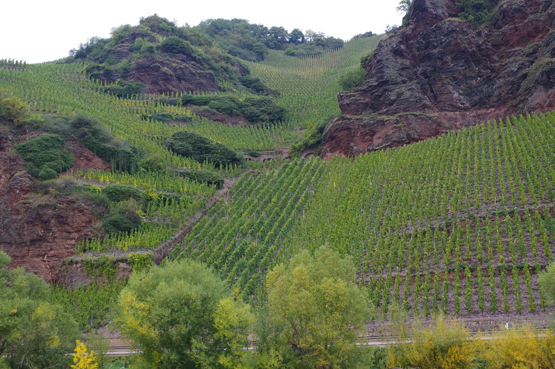 Hillside vineyards.JPG