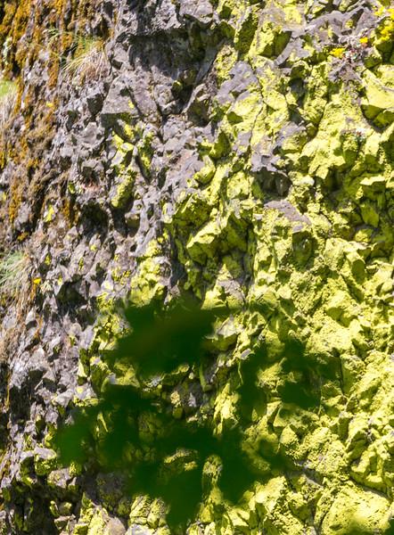 Lichens on the damp rocks beside Multnomah Falls