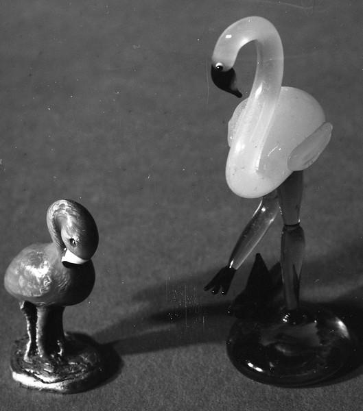 Flamingos Unite