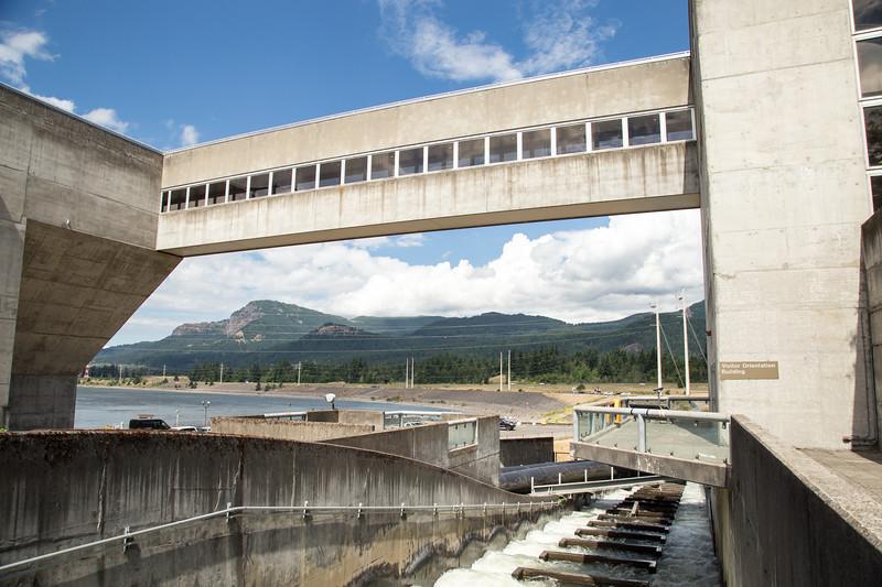 Bonneville Dam Fish Ladder