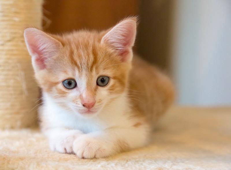 kittens17jun14-2129.jpg