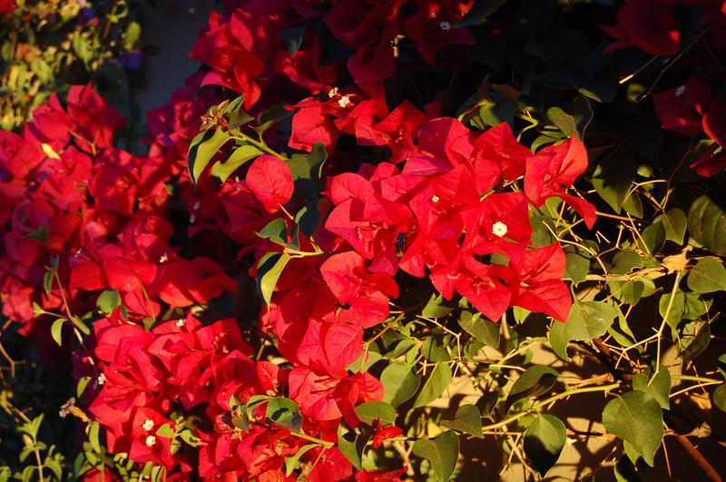 20121209_AZ_backyard_003.JPG