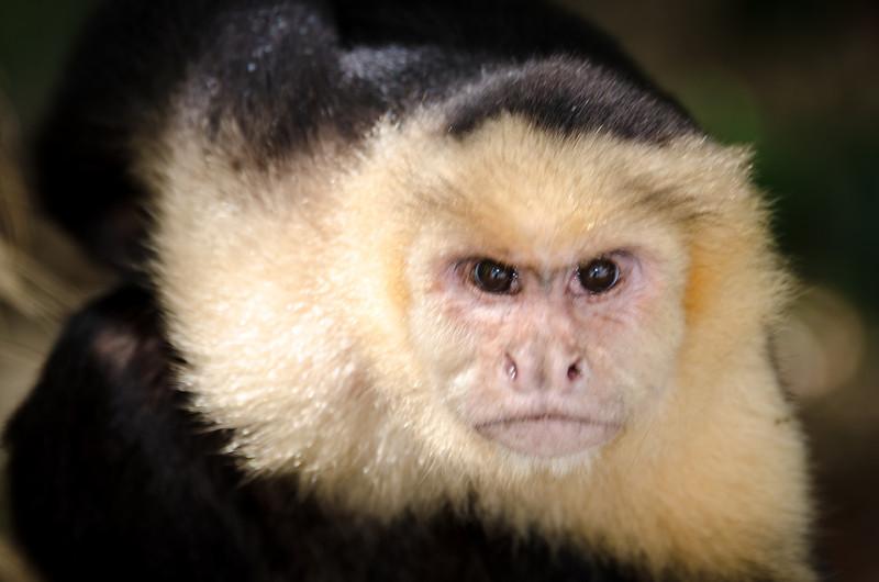 20131120_monkey_2.jpg