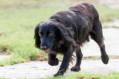 Jalapeno & Pups