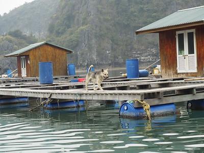 2-14-18 Ha Long Bay
