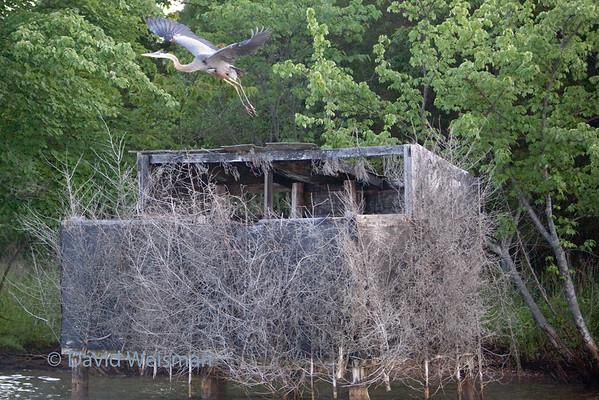 Lake Anna Birds