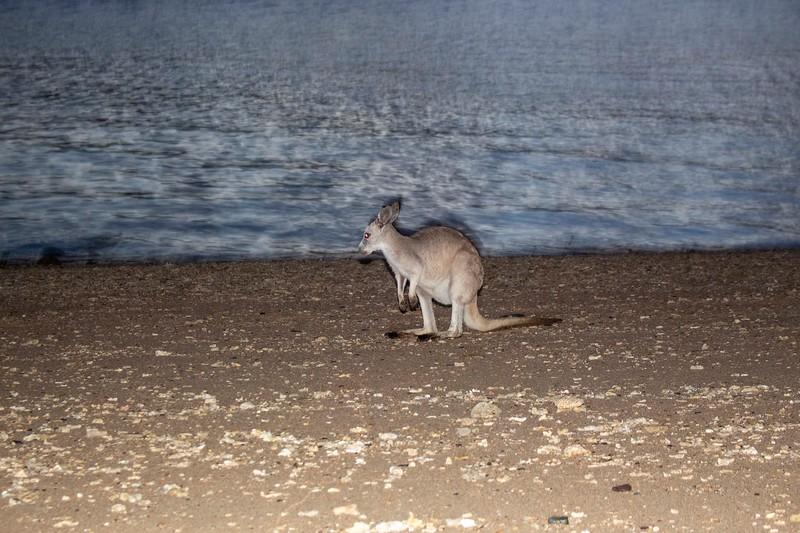Australia_478.jpg