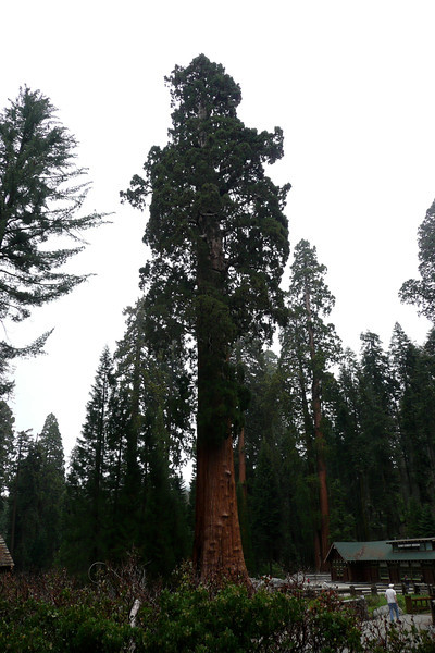 The Sentinel. Sequoia NP