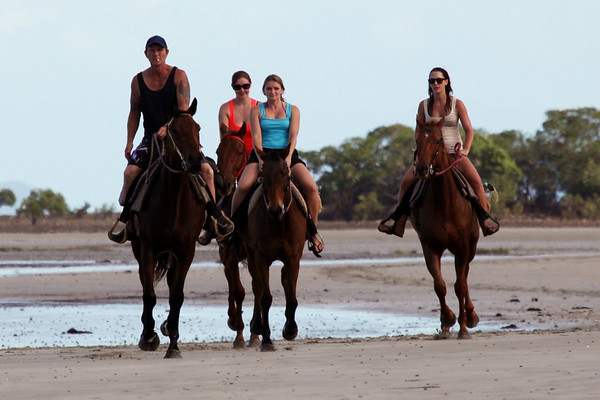 Sept 10th: Cape Tribulation: Horses on Beach: