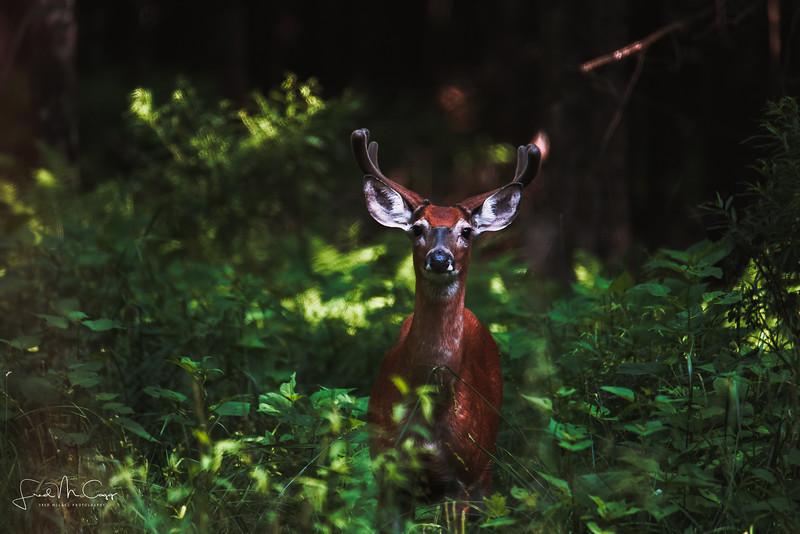 Buck.jpg