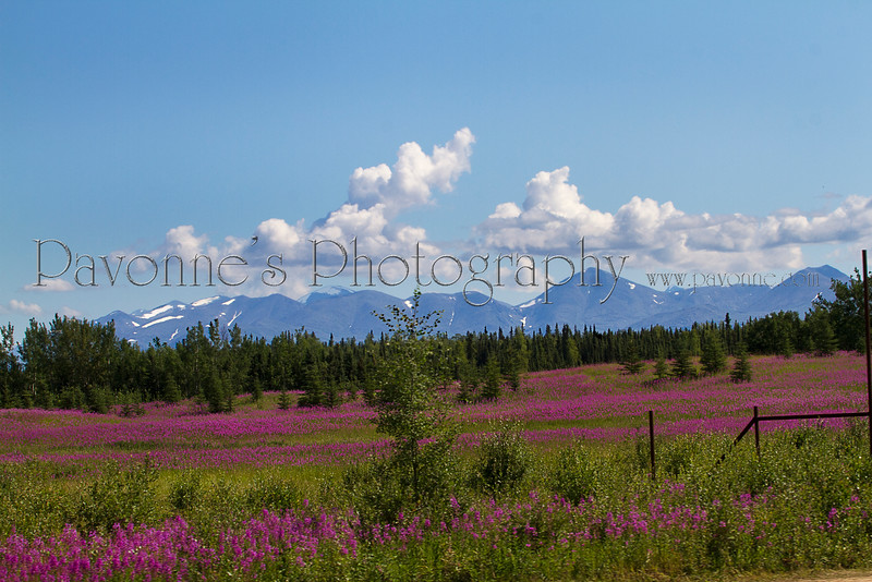 Alaska 8218.jpg