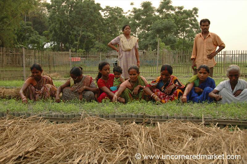 Weeding the Seedlings - West Bengal, India
