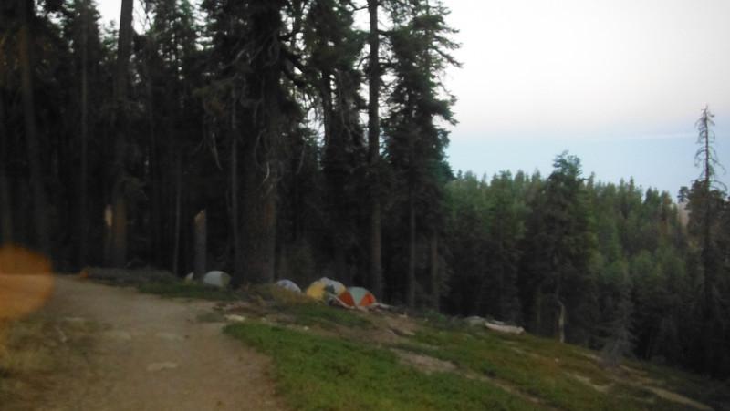 sequoia 057.JPG