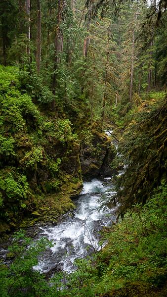 Sol Duc Falls Trail