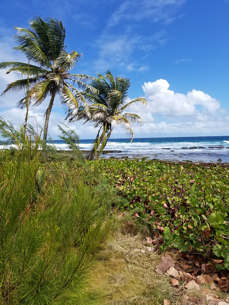 Barbados (22).jpg