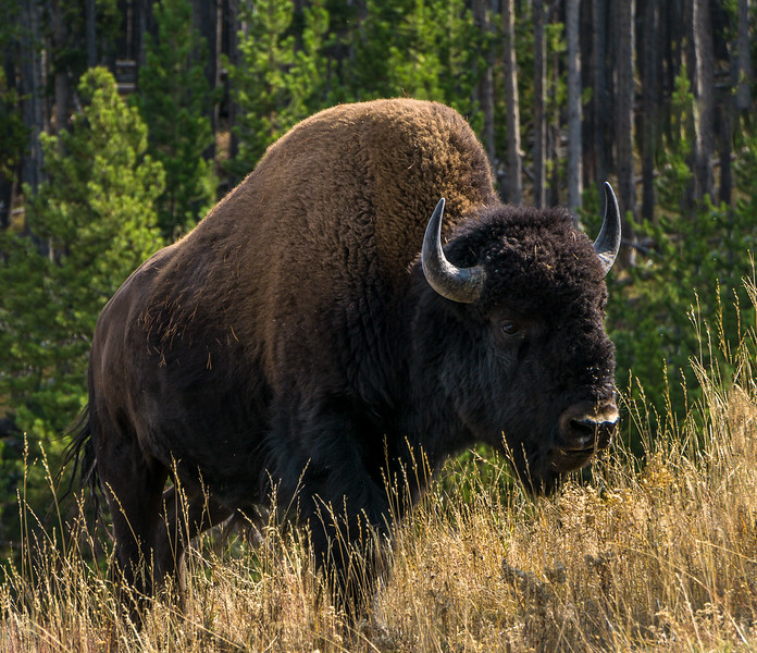 15-09-14_Yellowstone_.jpg