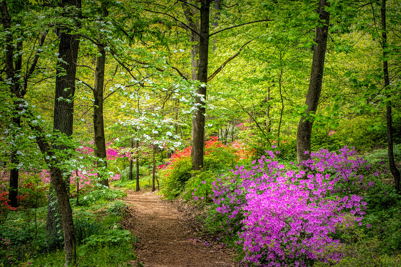 Spring Walk in the Woods
