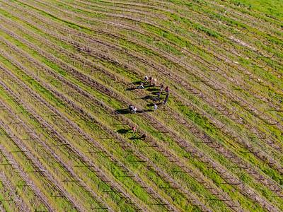 20200215 Casa Dumetz vineyard tour