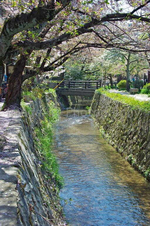 Tetsugakunomichi - Philosopher's Walk