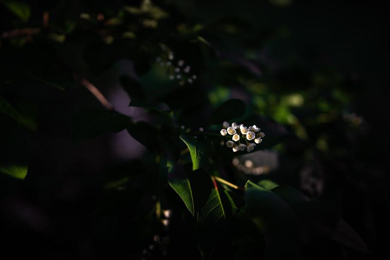 Flowers-169-1.jpg