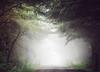 Head into the Fog