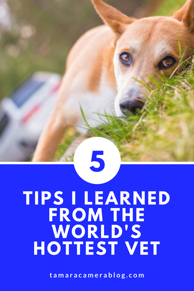 We got to talk with Dr. Evan Antin - the world's hottest vet on YouTube Live. Here are 5 amazing tips we learned about pet nutrition this season and beyond!