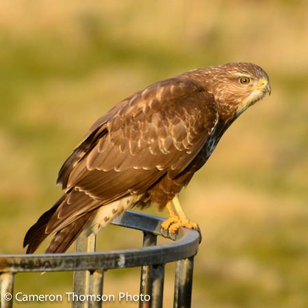 Birds in UK