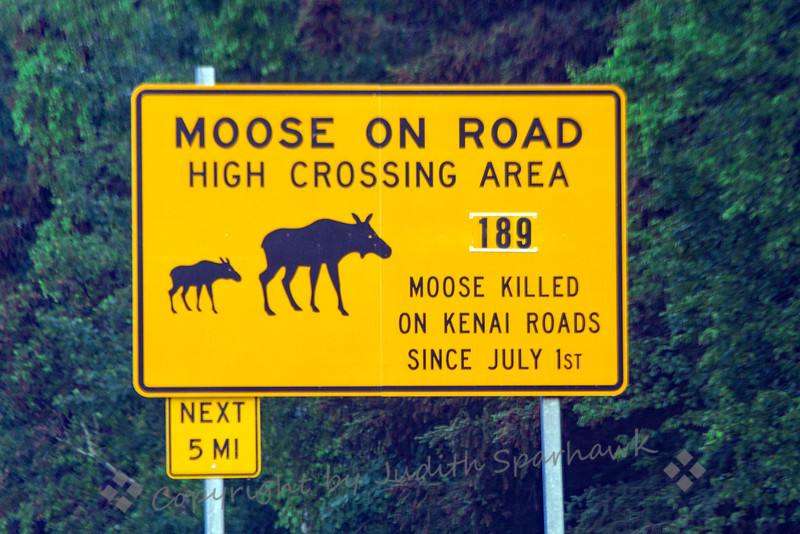 Moose Crash Site Sign