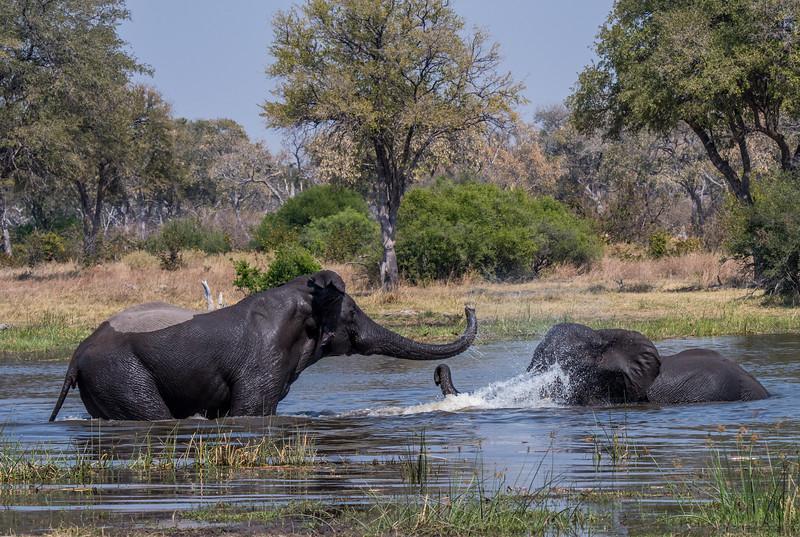 Botswana_June_2017 (2734 of 6179).jpg