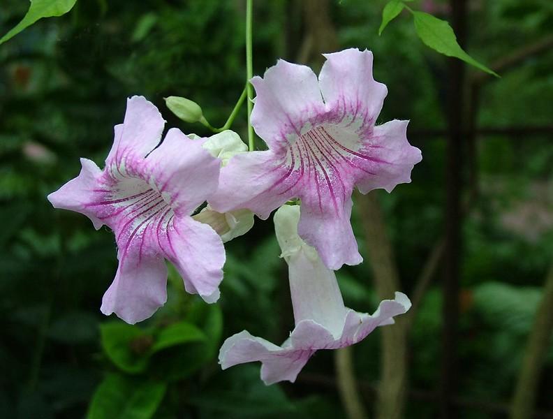 -flowers 210.jpg