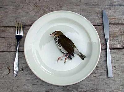 poop_bird.jpg