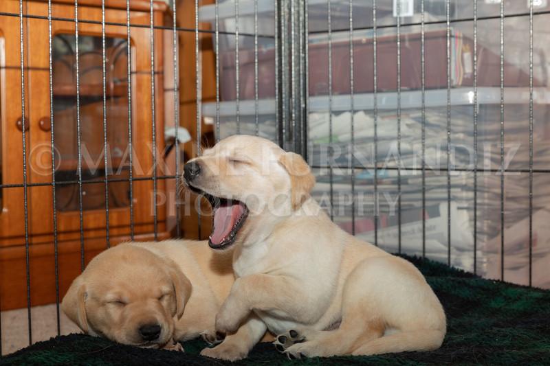 Weika Puppies 2 Mar 2019-8493.jpg