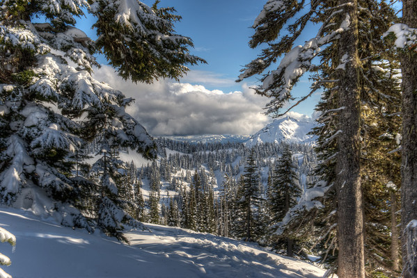 Winter at Rainier 2010.02.08