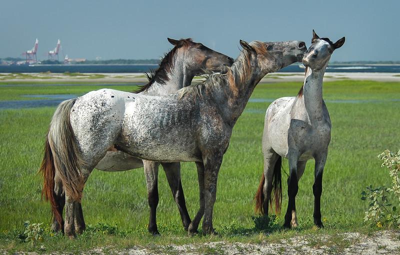 Wild Horse Bachelor Band Playing CI #3