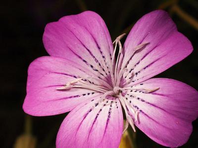 2007.07.10 NC Coho garden flowers