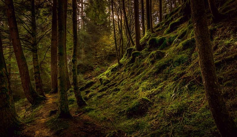 Forest Shadows-154.jpg